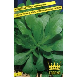 ENVELOPES CROWN SEEDS VALERIAN D HOLLAND BIG SEEDS