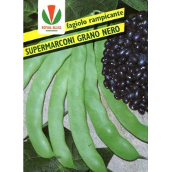BEAN GR. 500 RAMP. SUPER MARCONI S. BLACK ROYAL SEED