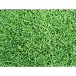 SEEDS GRAMIGNONE FOR LAWN...