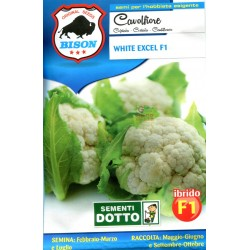 BISON SEEDS OF CABBAGE WHITE EXCEL F1 HYBRID